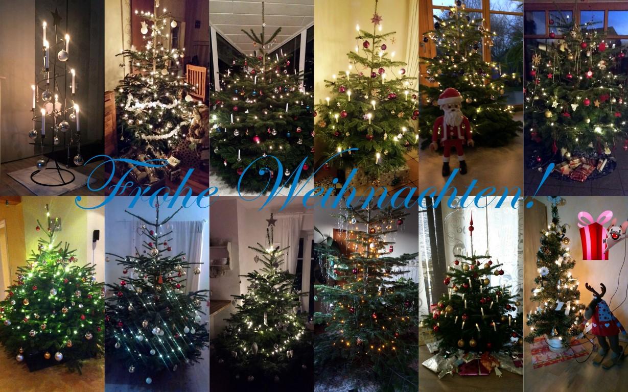 Weihnachtsbäume 2015.1 (Medium)